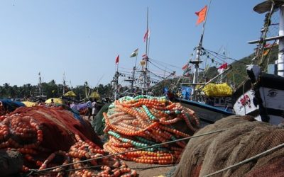 Legal Support for Professional Fisheries